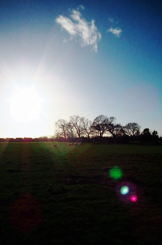 Winter Walk_Christelton, Cheshire