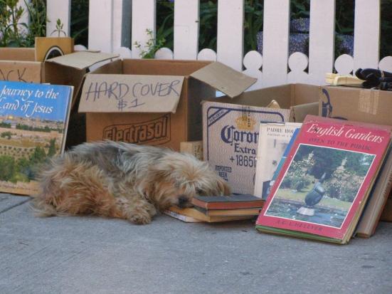 Napping Dog Kensington Market Toronto