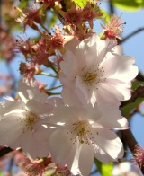 Photo Friday #15 –Spring!