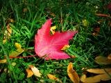 Photo Friday #36 –Fall