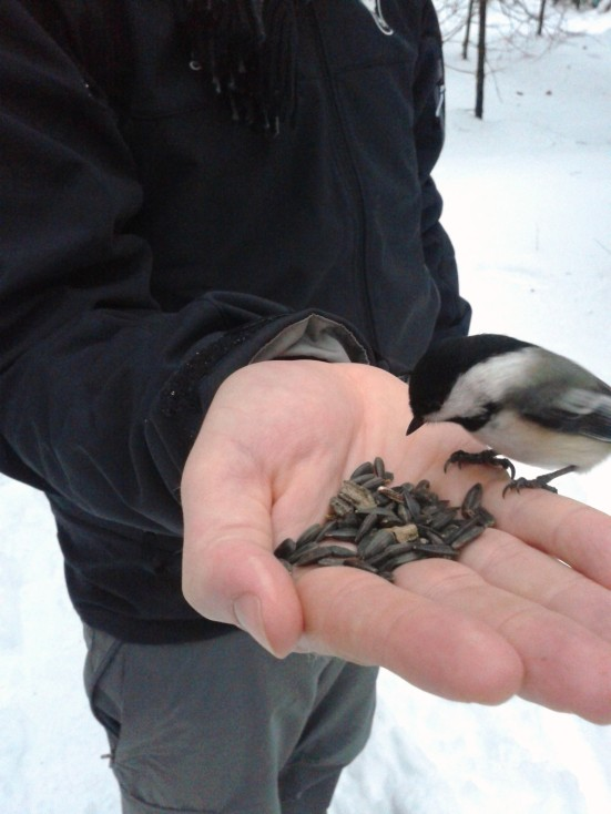 feeding chickadees Ottawa_2